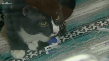 Digital Dive: Felix the cat survives washing machine ride