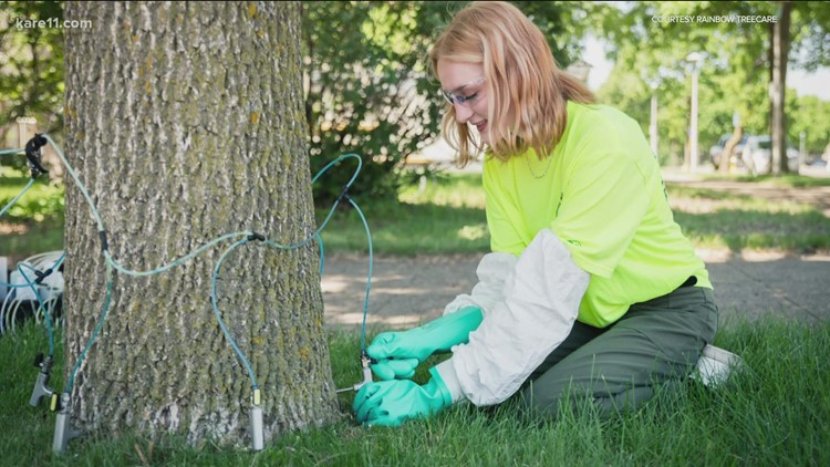 Grow with KARE: Treat or remove your ash trees this year