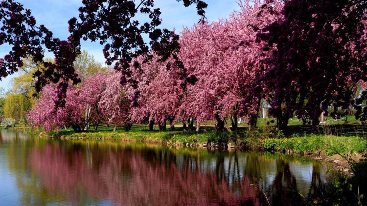 PHOTOS: Spring beauty