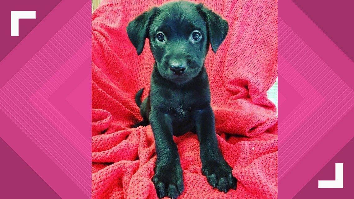 Adoptable puppies from Midwest Animal Rescue & Services