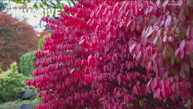Grow with KARE: Aggressive versus invasive