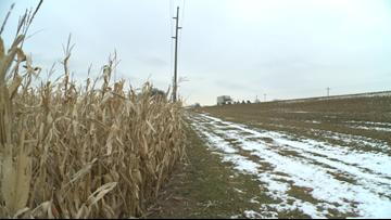 Living snow fences help keep roads clear