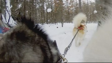 Minnesota 360: Dog sledding in Ely
