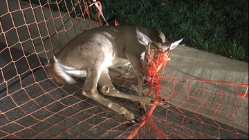 Deer rescued by Apple Valley police