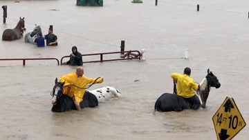 Not just people: Stranded animals among those being rescued from Imelda flooding