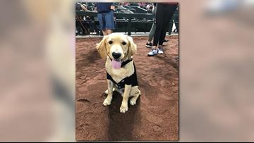 Hero pup that saved his owner from rattlesnake honored at Diamondbacks game