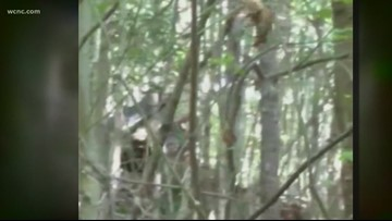 Hickory man claims he spotted three Bigfoots