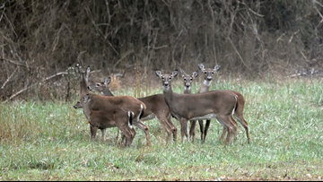 'Bambi' as punishment? Sentence in SW Missouri poaching case includes mandated viewings