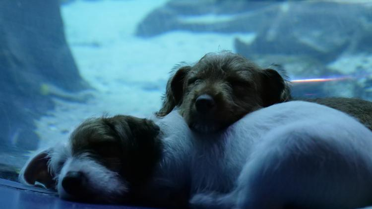 MUST SEE: Adorable puppies in foster care explore closed Georgia Aquarium