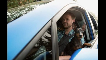 Driving with dog on lap would be illegal, Michigan lawmaker proposes